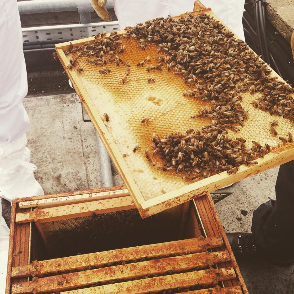 Took part in a spot of rooftop beekeeping this afternoonhellip